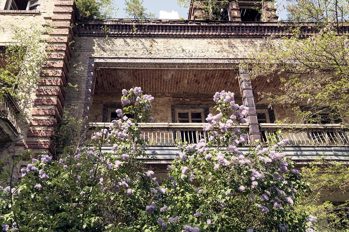 ©Baum&Zeit Baumkronenpfad Beelitz-Heilstätten Frühling Chirurgiegebäude Detail Flieder Südseite