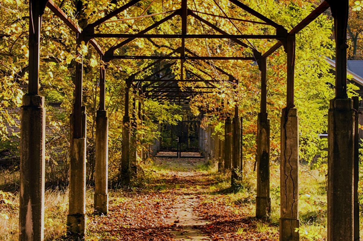 ©Baum&Zeit Baumkronenpfad Beelitz-Heilstätten Waldpark Wandelgang