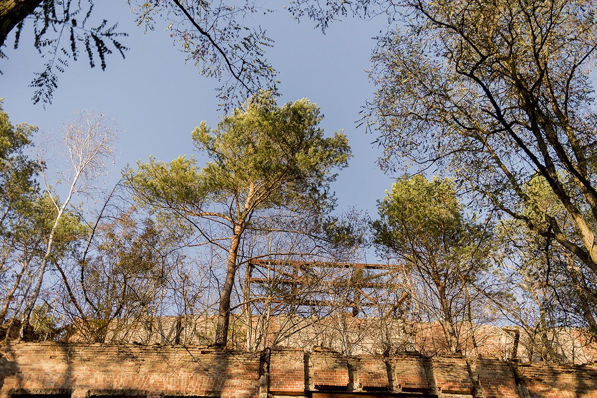 ©Baum&Zeit Baumkronenpfad Beelitz-Heilstätten Sonnenaufgang über Dachwald Ruine Alpenhaus