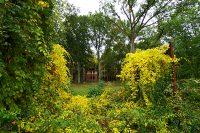 ©Baum&Zeit Baumkronenpfad Beelitz-Heilstätten Waldpark Blick von der Liegehalle auf die Ruine Alpenhaus