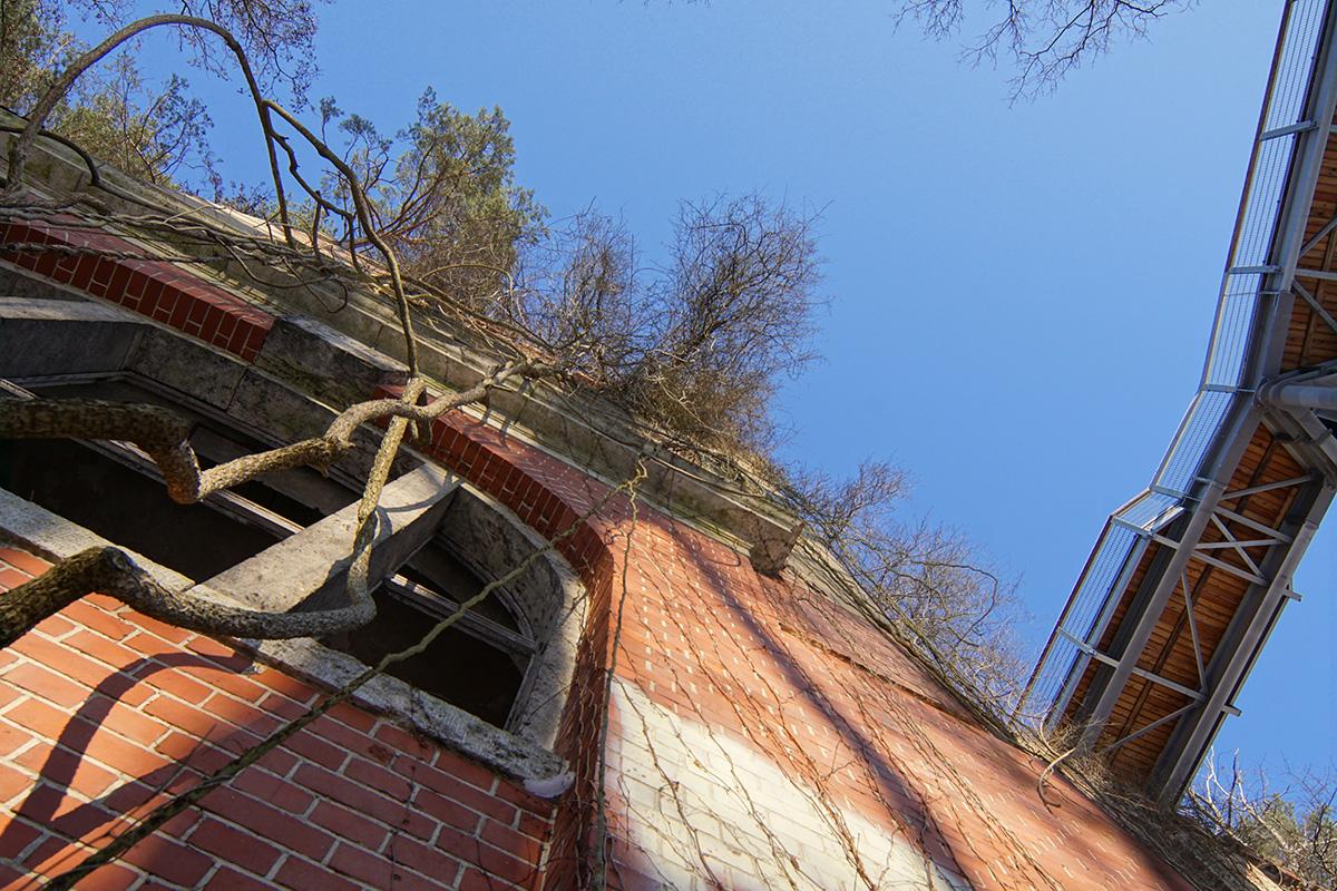 ©Baum&Zeit Baumkronenpfad Beelitz-Heilstätten Ruine Alpenhaus mit Dachwald und Pfad Detailansicht