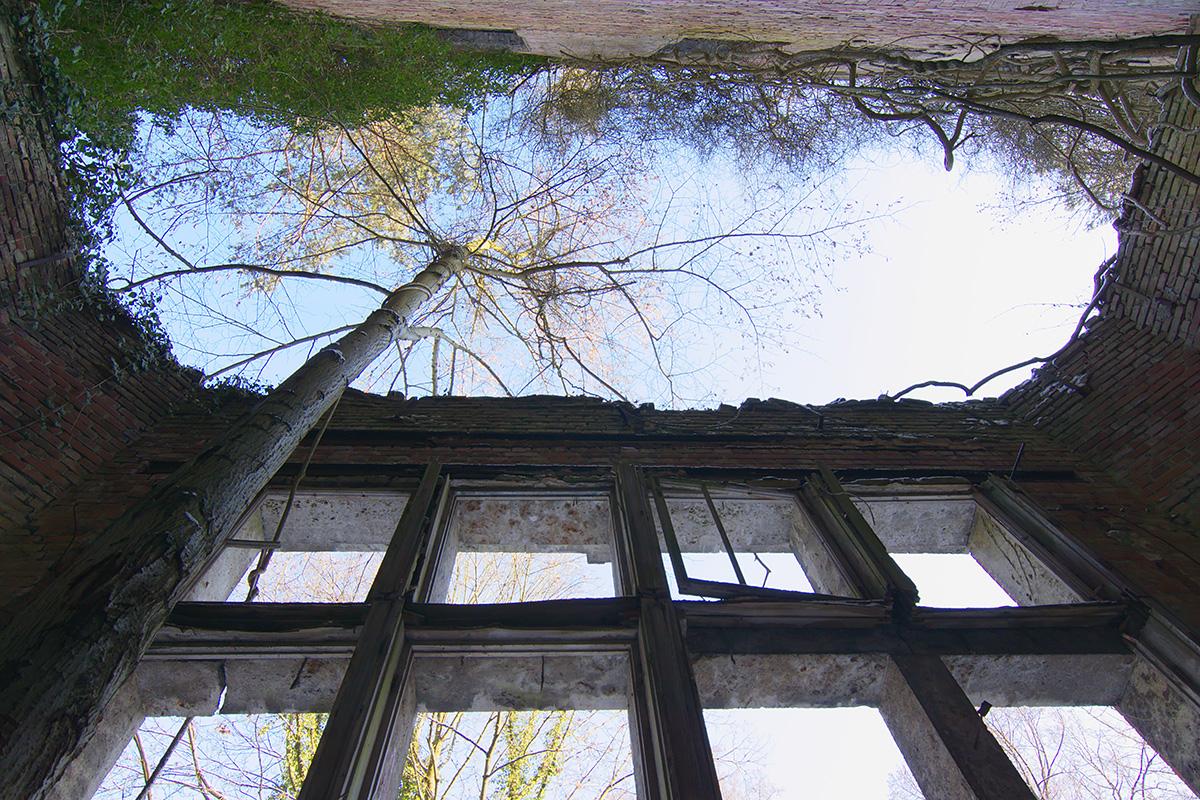 ©Baum&Zeit Baumkronenpfad Beelitz-Heilstätten Ruine Alpenhaus Baum im Speisesaal Detailansicht