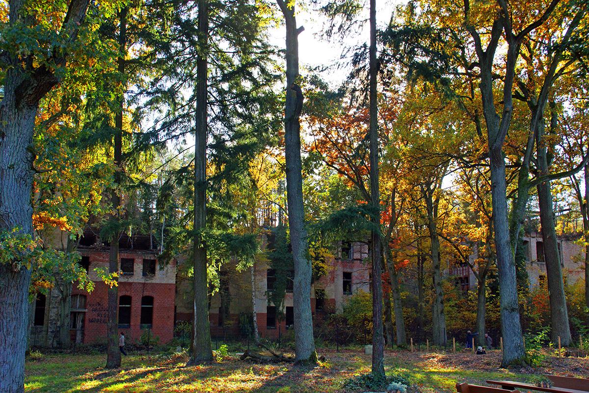 ©Baum&Zeit Baumkronenpfad Beelitz-Heilstätten Waldpark mit Ruine Alpenhaus Herbst