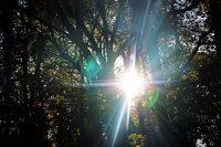 ©Baum&Zeit Baumkronenpfad Beelitz-Heilstätten Waldpark Detail