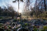 ©Baum&Zeit Baumkronenpfad Beelitz-Heilstätten Winter im Waldpark